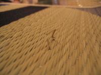 天然素材のイ草を織っていますので、一部写真のようにイ草が切れている部分がございます。予めご了承ください。